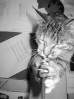 https://www.eatock.com/files/gimgs/th-184_184_cat-strap.jpg